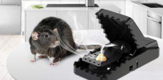 trappola a scatto per topi